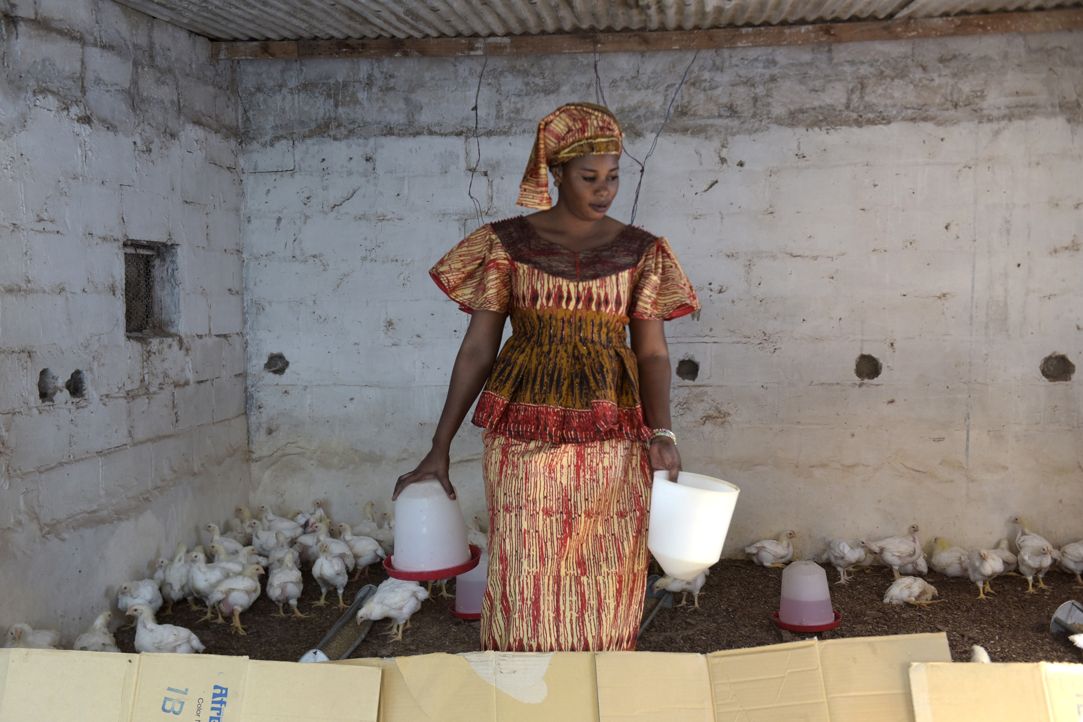 نديي بويي، استفادة من صناديق التعاضد ما سمح لها بالاستثمار في مزرعتها للدواجن