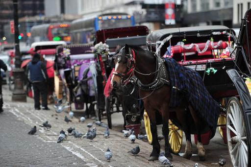 عربات تجرها الجياد في سنترال بارك في نيويورك