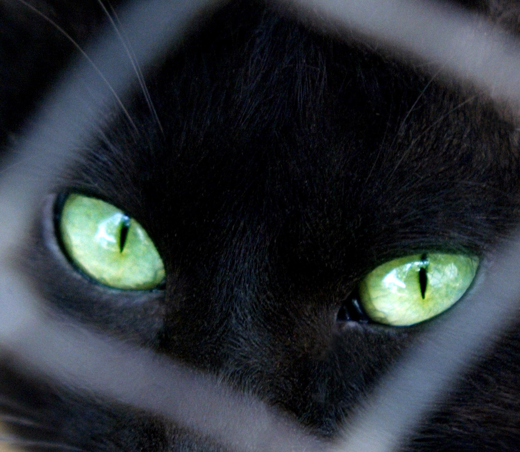 رؤية قط أسود لا تجلب النحس