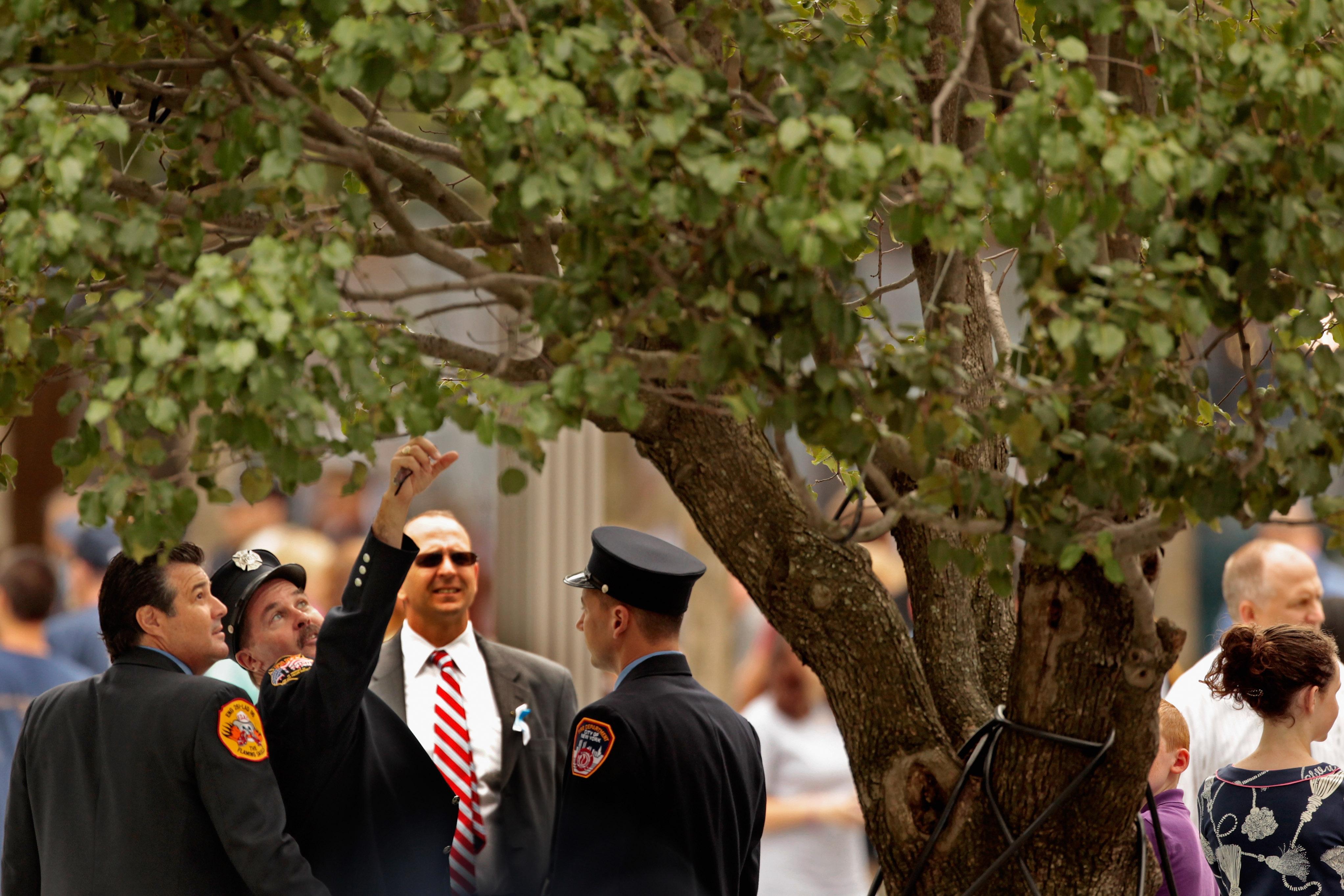 رجال إطفاء في مدينة نيويورك ينظرون إلى الشجرة الناجية بعد نحو عام من إعادتها