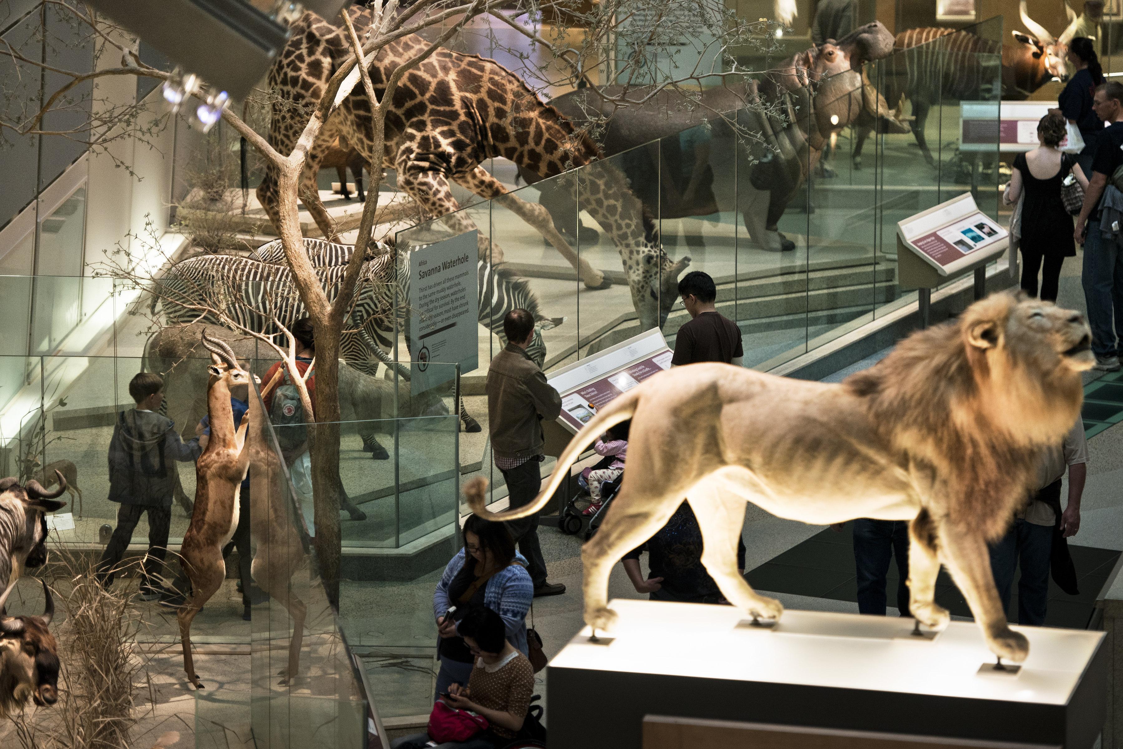 عرض أنواع من الحيوانات في باحة المتحف