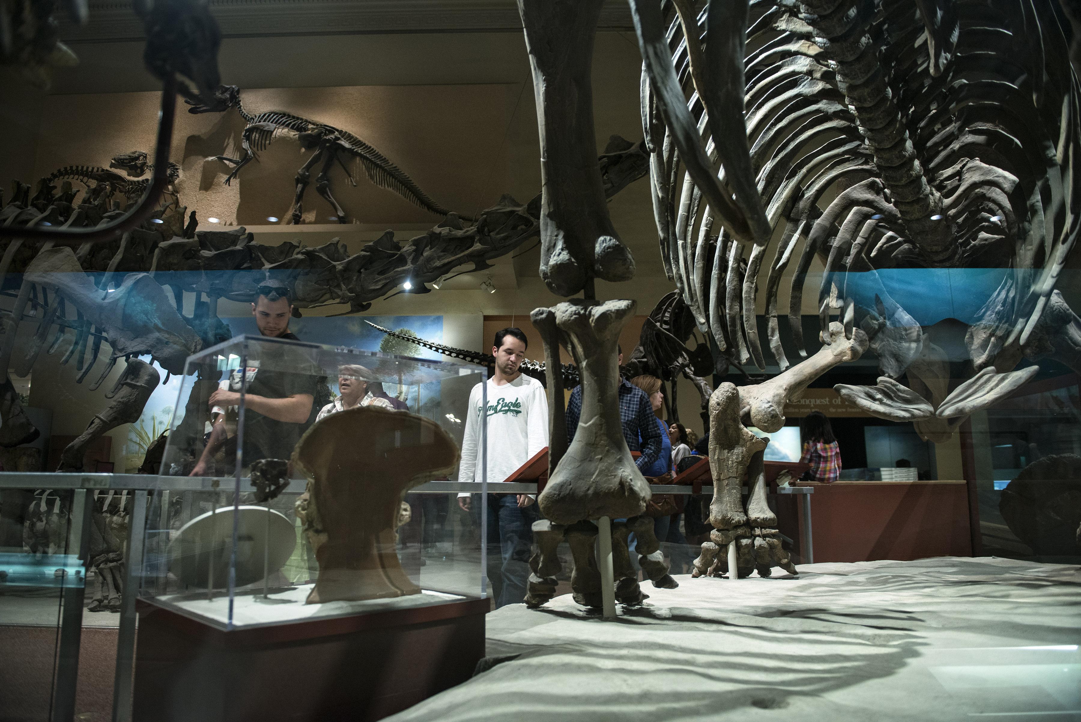 مجسمات لديناصورات داخل المتحف
