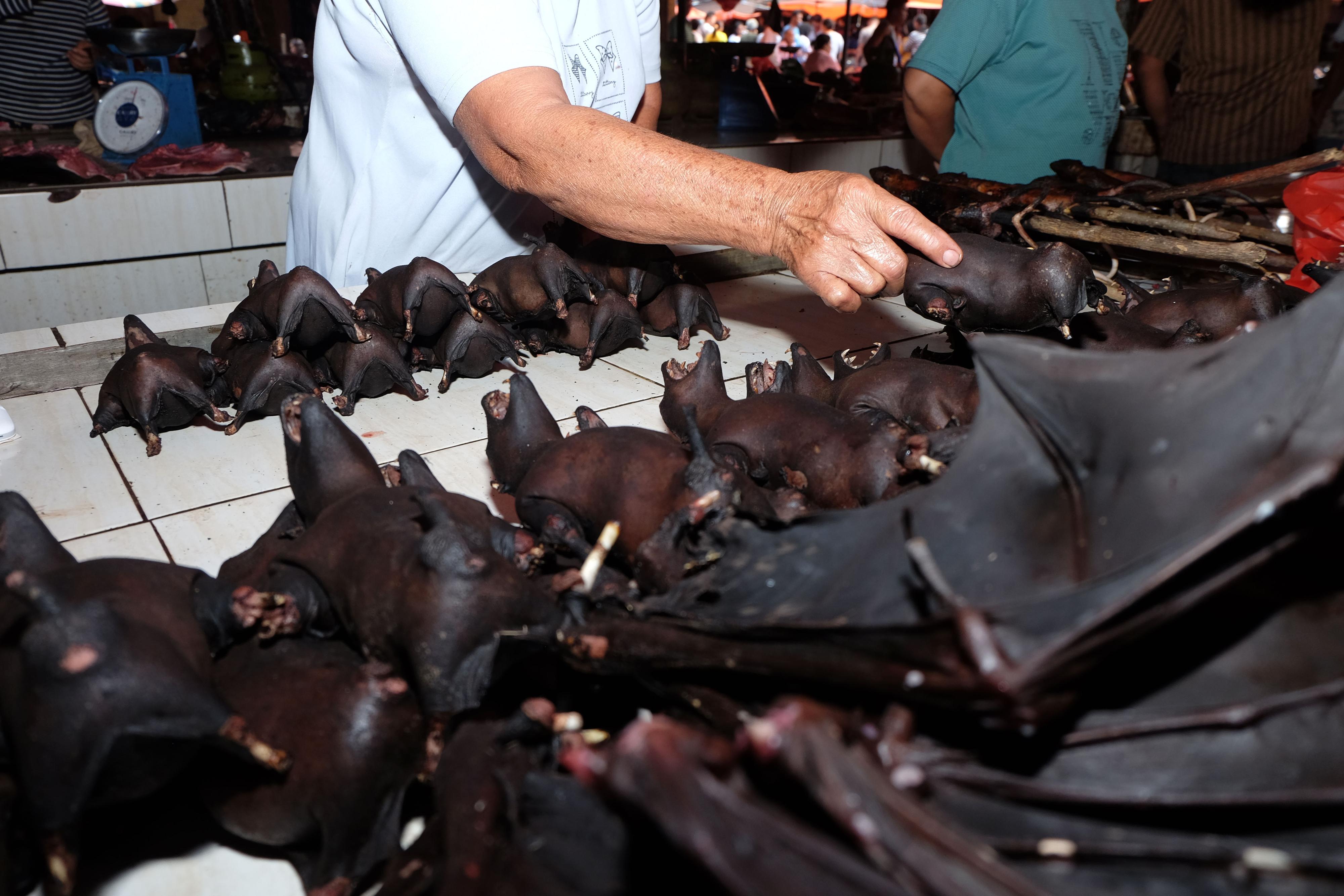 فيروسات الخفافيش تقفز إلى البشر من خلال وسيط الحيواني