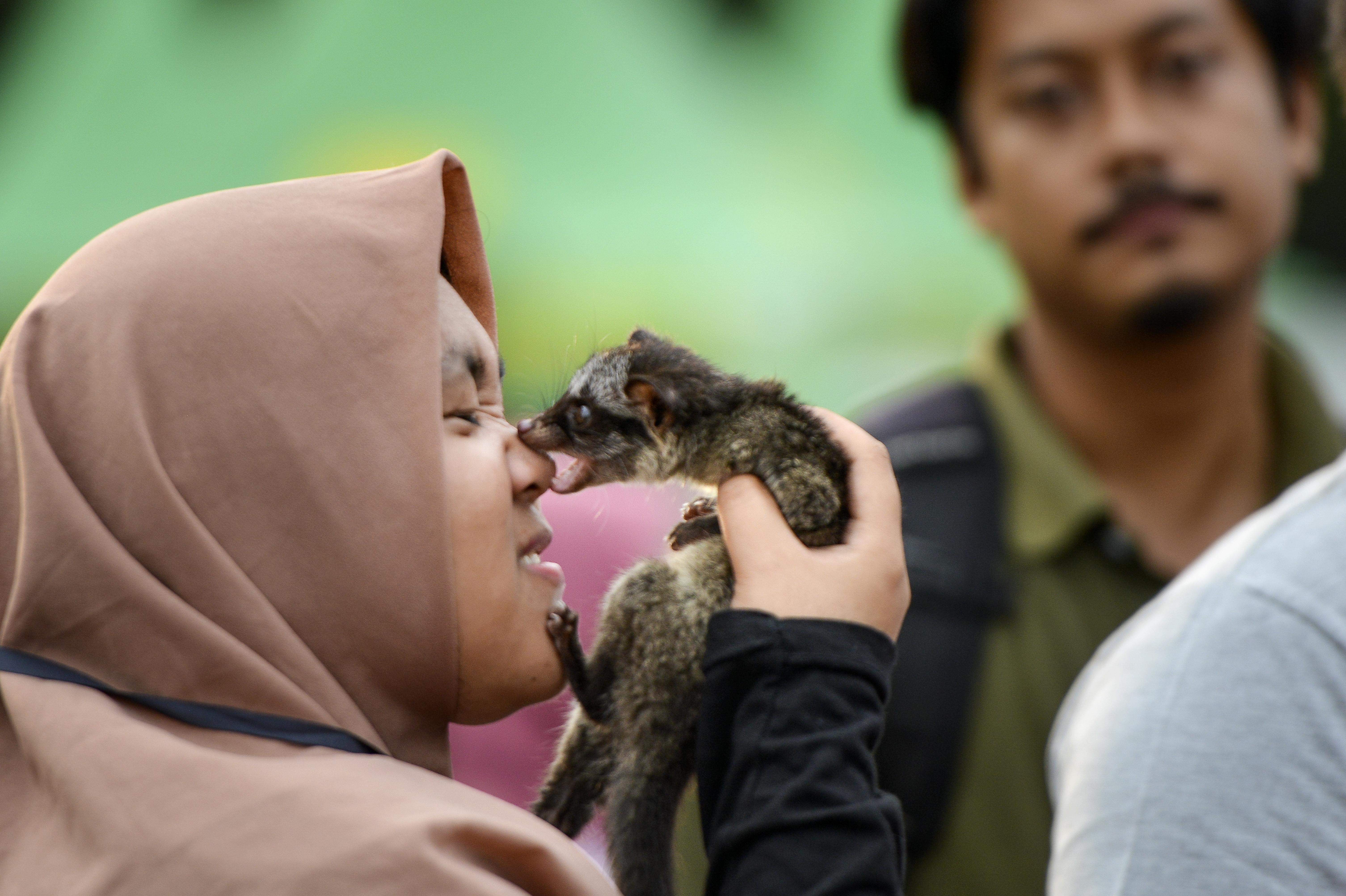 سيدة تلعب مع حيوان الزباد
