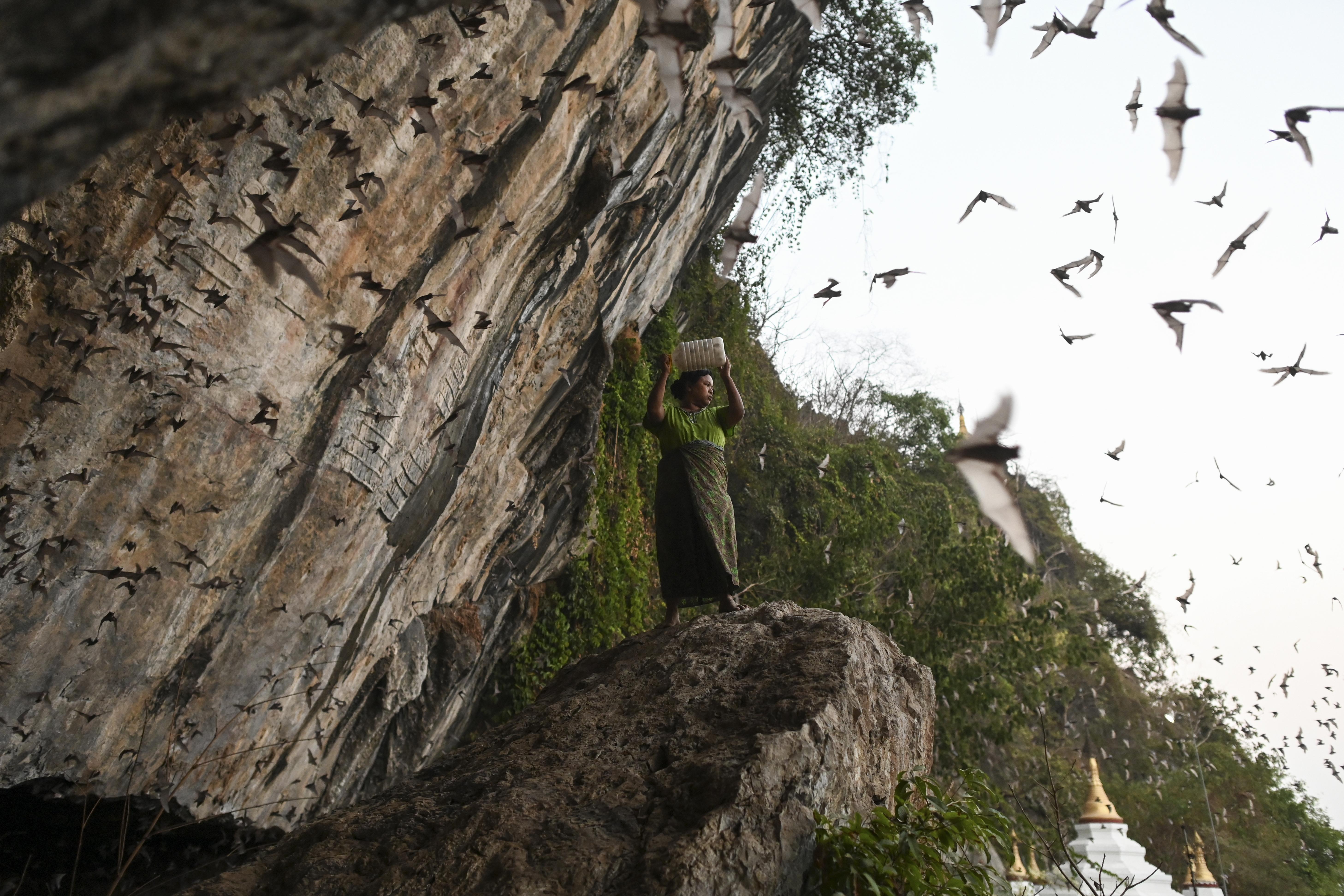 الخفافيش هي أهم الحيوانات المشتبه في استضافتها فيروس كورونا المستجد ونقله إلى الإنسان