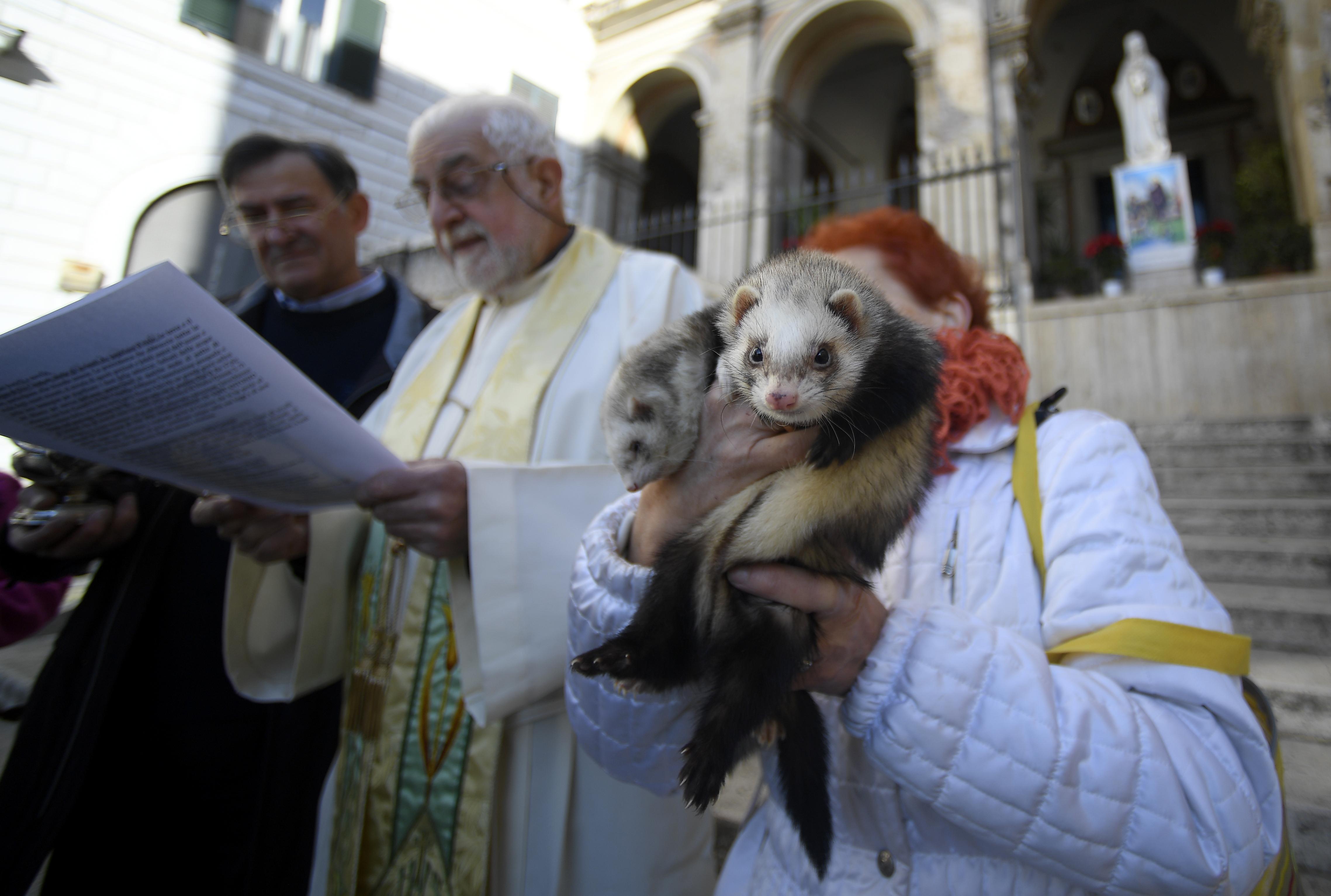 امرأة تمسك بحيوان النمس في كنيسة في روما بإيطاليا - صورة بتاريخ 17 يناير 2020