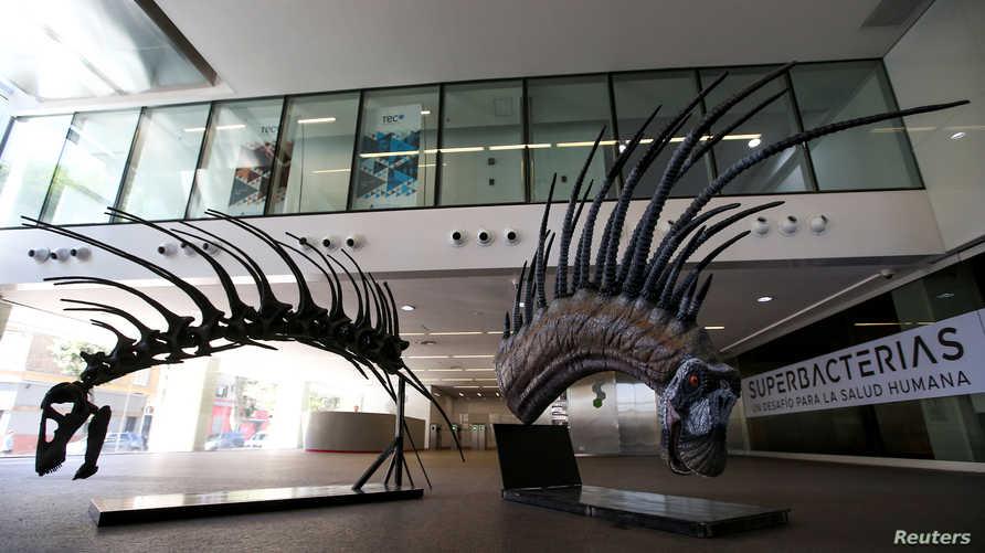 ديناصور برقبة ذات قرون مدببة