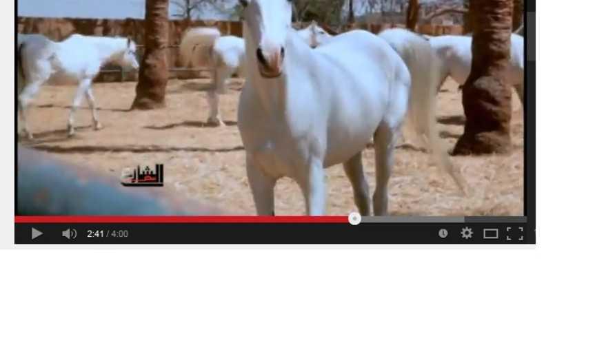 حصان عربي مصري