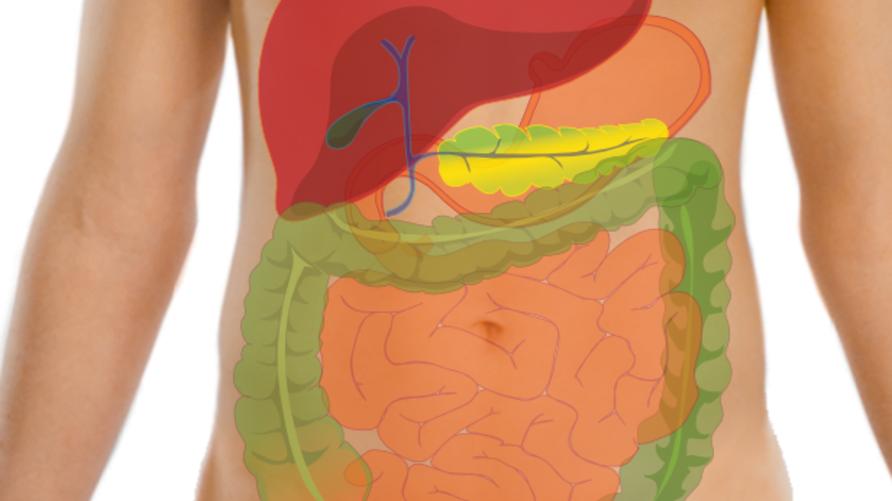 اختبر معلوماتك عن جسم الإنسان
