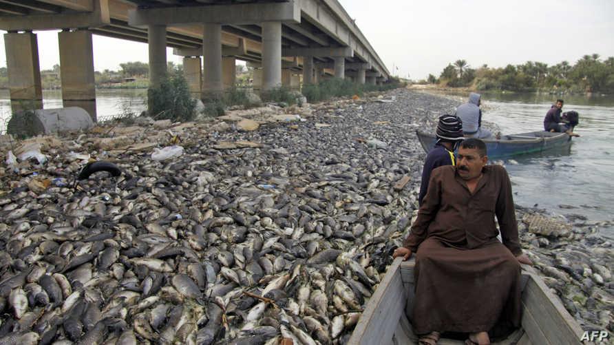 عراقيون يبحرون بجانب أسماك نافقة