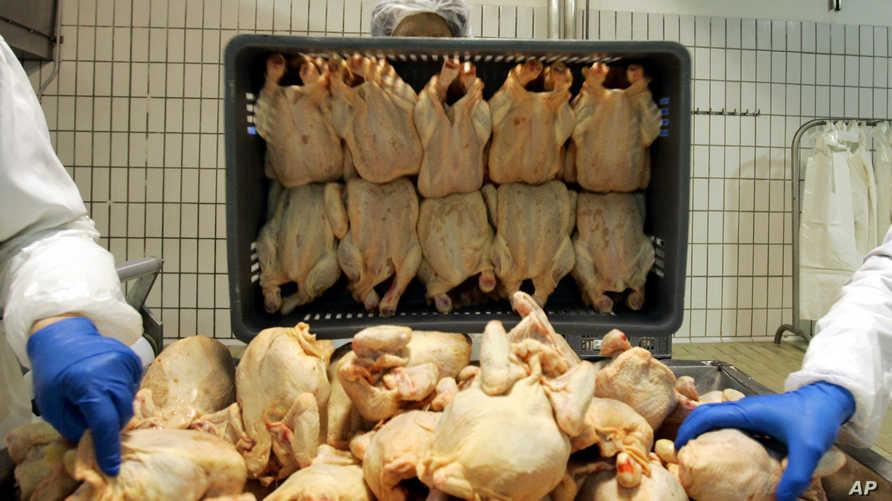 دجاج غير مطبوخ