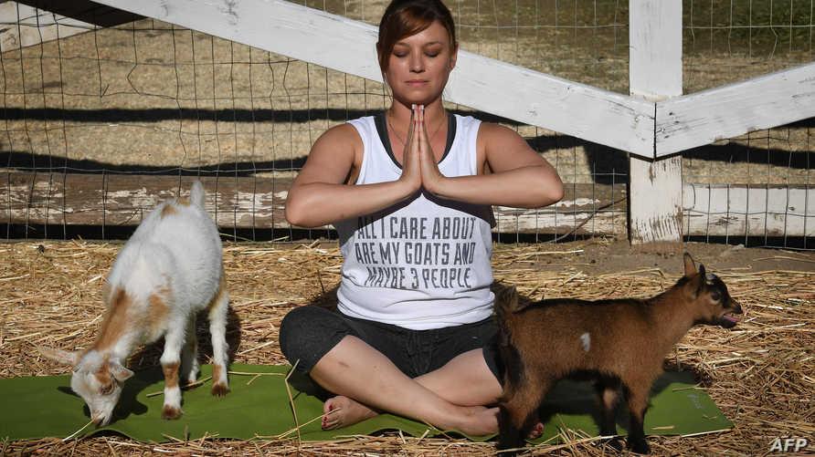 اليوجا مع الماعز آخر الصيحات في أميركا