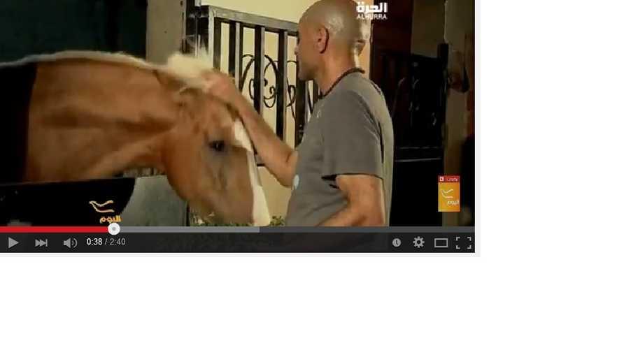 إسلام عزمي مع حصانه