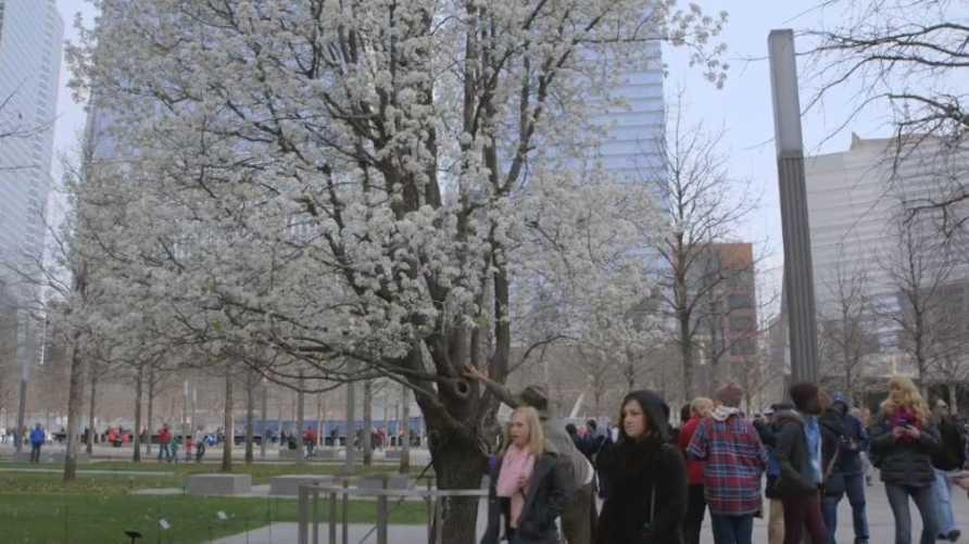 الشجرة الناجية في نيويورك