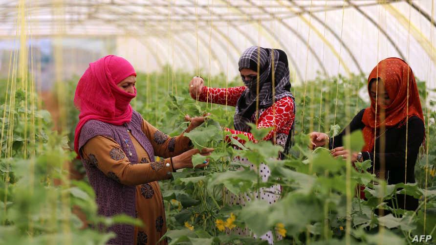 نساء عراقيات عاملات/وكالة الصحافة الفرنسية - أرشيف