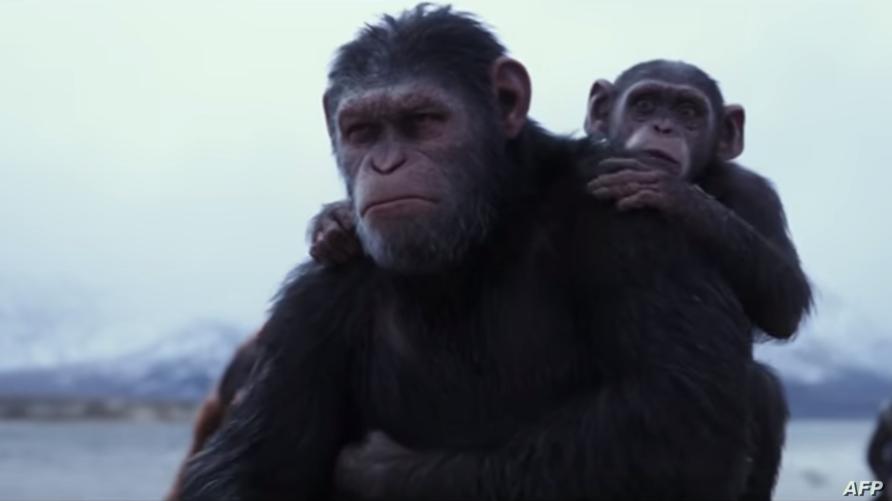 لقطة من فيلم 'War for the Planet Of The Apes'