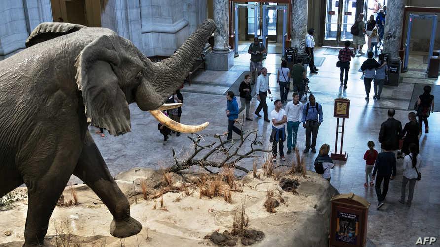 داخل المتحف الوطني للتاريخ الطبيعي بواشنطن
