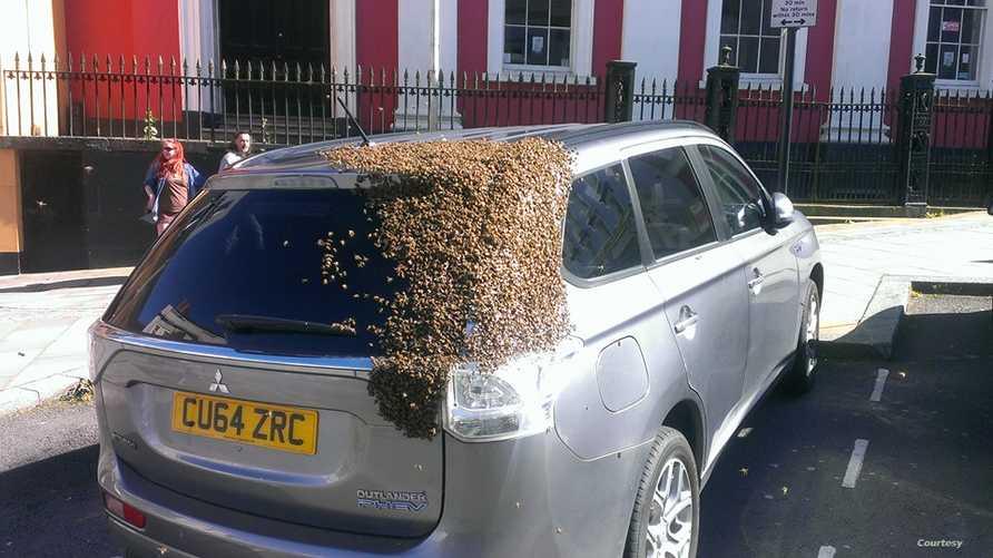 النحل يحاصر السيارة