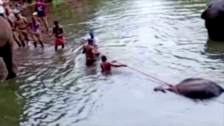 الحادثة التي وقعت في ولاية كيرالا الهندية أججت مشاعر الغضب
