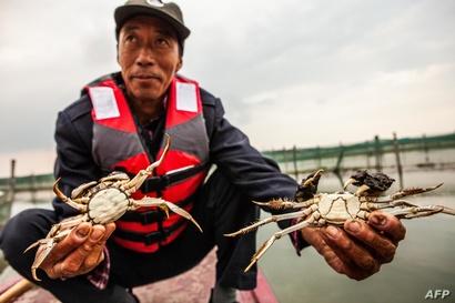 صيد سرطان البحر