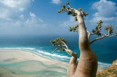 منظر من جزيرة سقطرى
