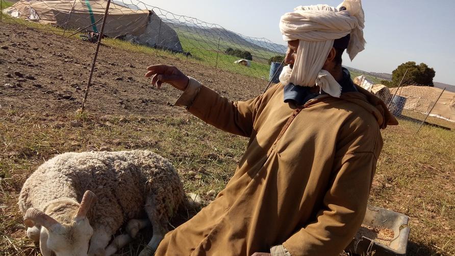 محمد الزين إلى جانب خروف أصيب بمرض بسبب الأعلاف المغشوشة