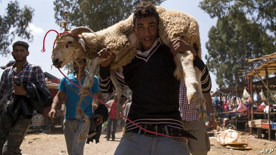 مواطن مغربي يحمل كبش عيد اقتناه من سوق قريب من مدينة سلا - أرشيف