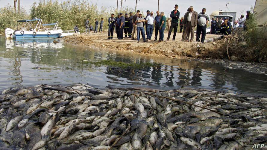 ينظر العراقيون بأسى لخسارة كمية هائلة من الأسماك