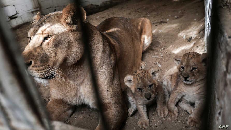 جانب من حديقة الحيوانات في غزة-أرشيف