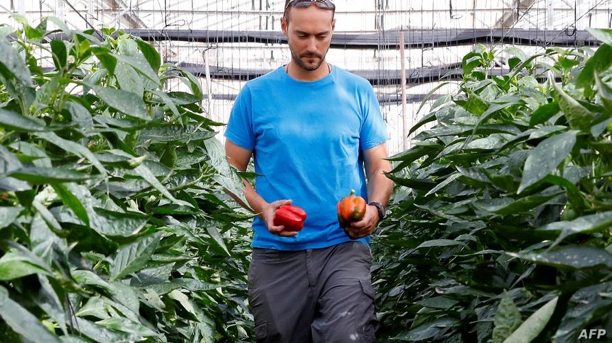 المزارع الإسرائيلي إيتان غيدج