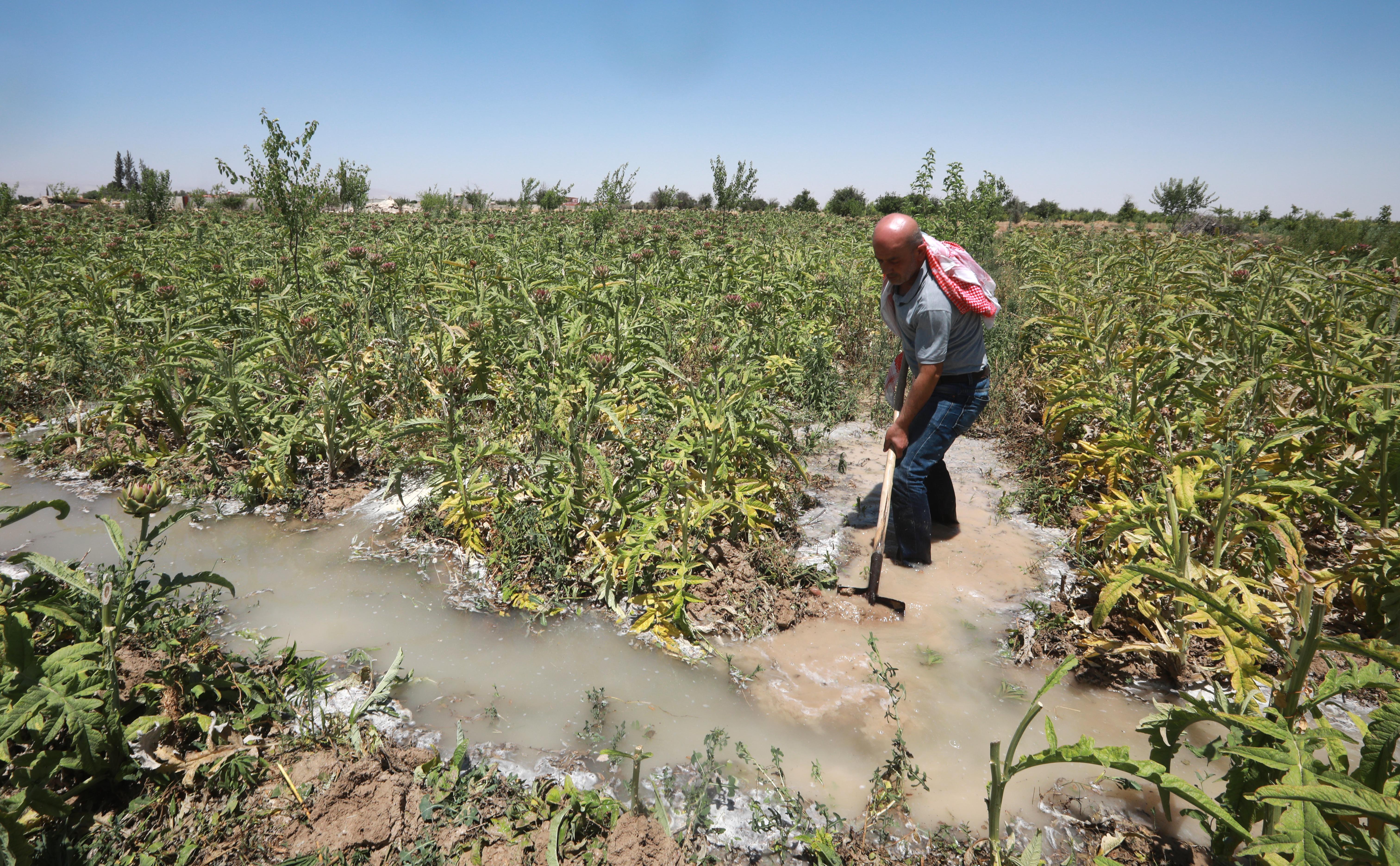 في بلدة دير العصافير، ينهمكُ المزارع الخمسيني رضوان هزاع في فتح قناة ري جديدة في أرضه