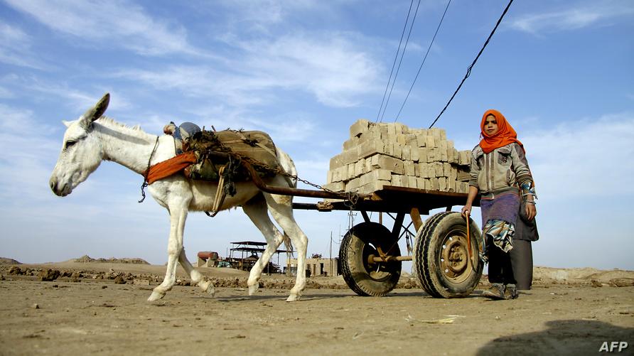 سيدة عراقية تتبع عربة يجرها حمار